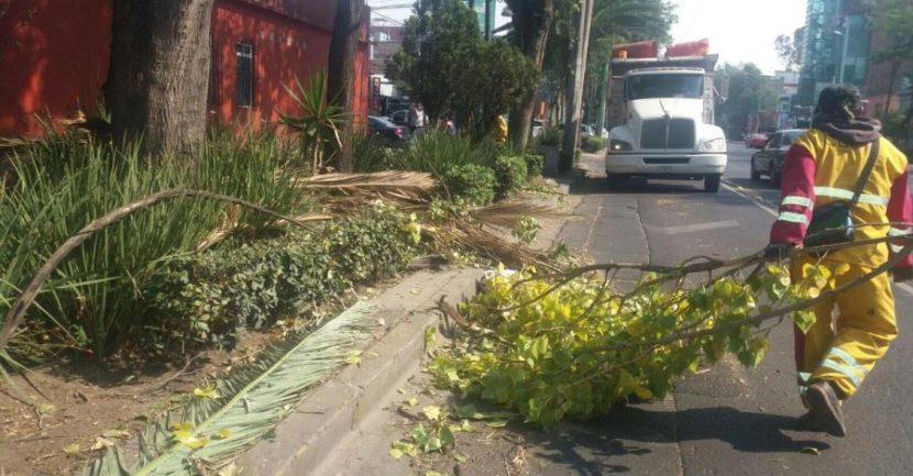 REPORTAN TRES ÁRBOLES CAÍDOS POR FUERTES VIENTOS EN LA CDMX