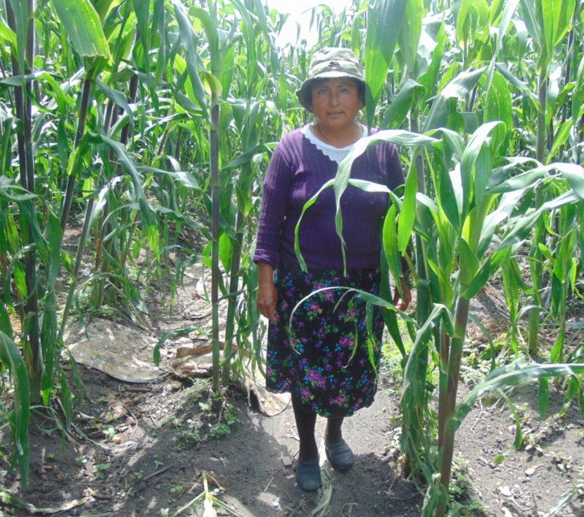 ERRADICAR LA POBREZA ALIMENTARIA, RETO DE LA AGRICULTURA MEXICANA: CIOAC-JDLD