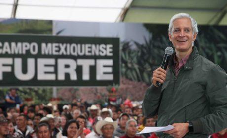 ENTREGA ALFREDO DEL MAZO MÁS DE 20 MIL PLANTAS DE AGAVE A PRODUCTORES DE MEZCAL