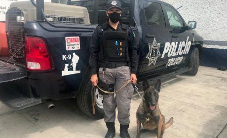Realiza agrupamiento canino de Toluca 17 detenciones por diversos delitos