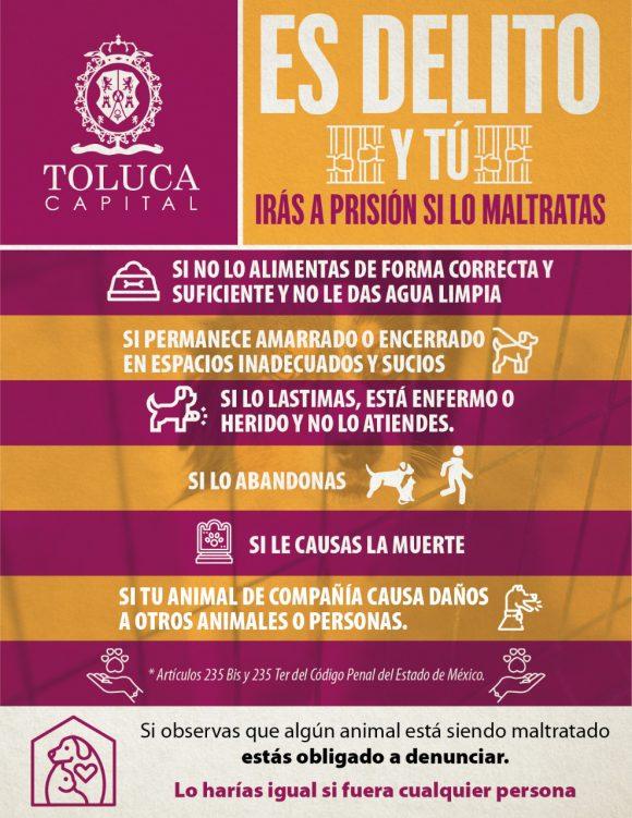 TOLUCA LLAMA A DENUNCIAR EL MALTRATO ANIMAL