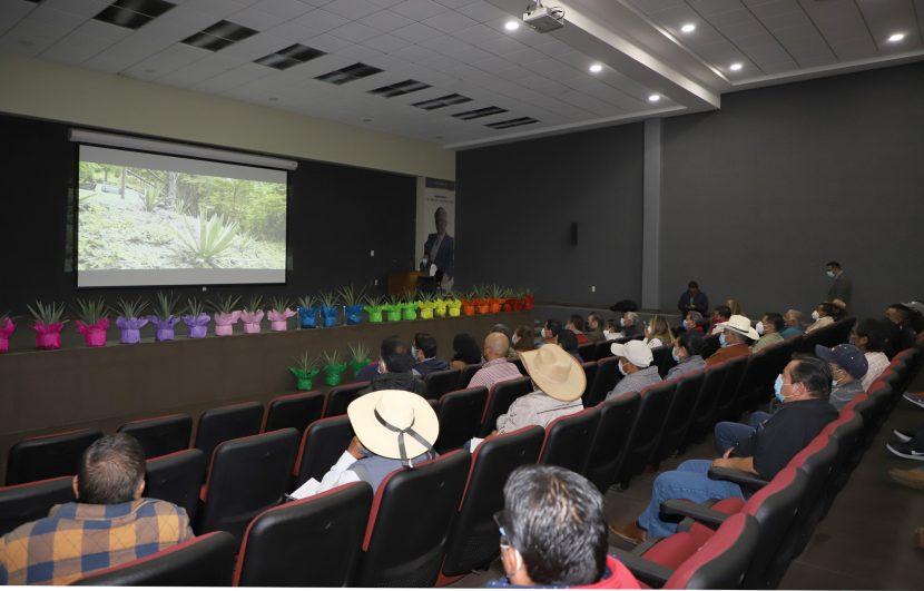 PRODUCE GEM PLANTAS NATIVAS DE AGAVE MEZCALERO